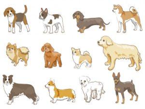人気犬種が遺伝病や飼育放棄で苦しまないように、ペットの流通や管理・飼育のシステムを整備していくことが重要なのだと思います。